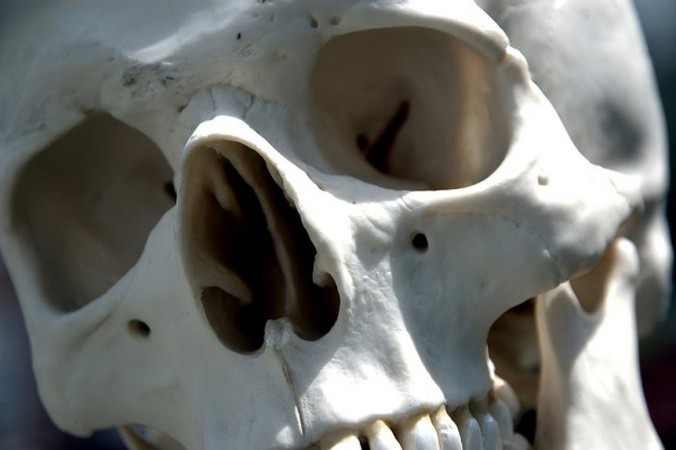 Человеческий череп. Стив Снодграсс/CC BY 2.0 | Epoch Times Россия