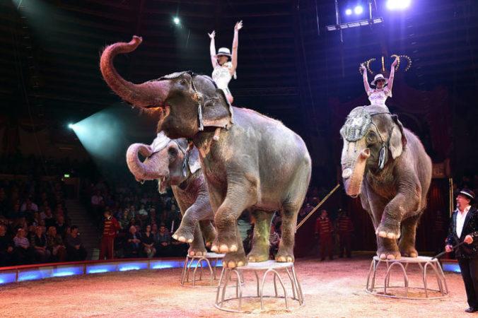 Шоу слонов Джеймса Пуйдебуа в цирке Мюнхена, Германия, 25 декабря 2016 года. Фото: Hannes Magerstaedt/Getty Images | Epoch Times Россия