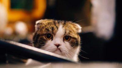 (Видео) Кот не верил своим глазам: новый кот в доме, и хозяин с ним играет. Какое предательство!