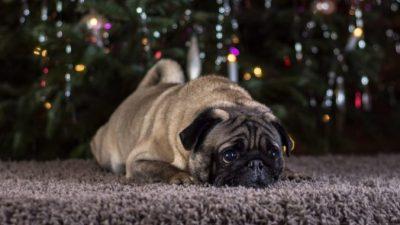 (Видео) Рождественское чудо. Мальчик верил в возвращение потерянного пса, и это случилось