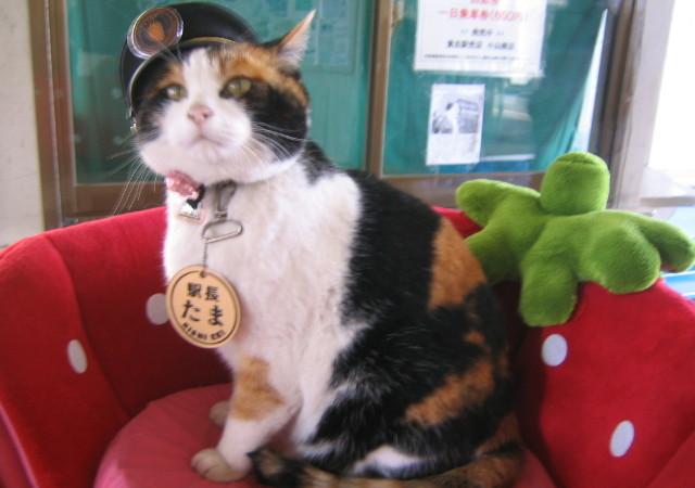 Начальник станции Киши, Япония — кот Тама. Фото: Sanpei/Japanese Wikipedia/https://creativecommons.org/licenses/by-sa 3.0 | Epoch Times Россия