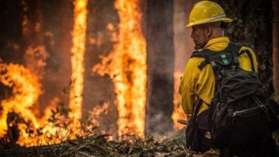 (Видео) «Ад в Австралии». Российские и зарубежные звёзды жертвуют деньги на борьбу с лесными пожарами