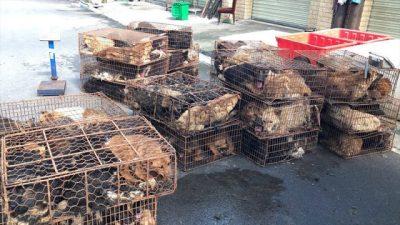 Активисты спасли 200 собак, которых везли, чтобы продать на мясной рынок в Китае