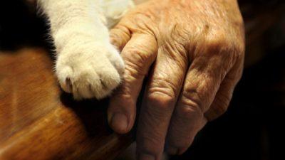 Коту в Челябинске пришлось укусить за шею свою 79-летнюю хозяйку. И она ему за это бесконечно благодарна!