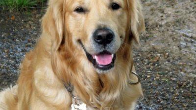 Пёс оригинальным способом не дал хозяйке поехать в Ухань в январе. Сначала она разозлилась, но теперь так ему благодарна!