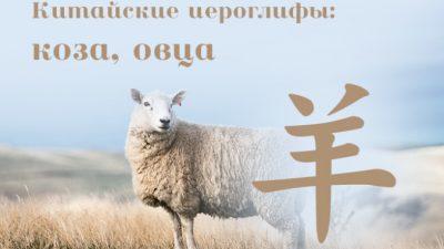 Китайские иероглифы: 羊 (коза, овца)