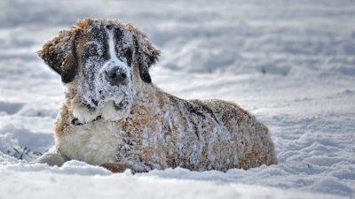 Бездомную собаку нашли в снегу на обочине. Она согревала собой 5 осиротевших котят