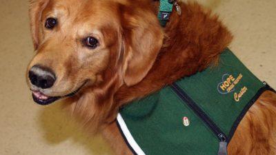 Учёные хотят привлечь собак к необычным поискам. Поискам COVID-19