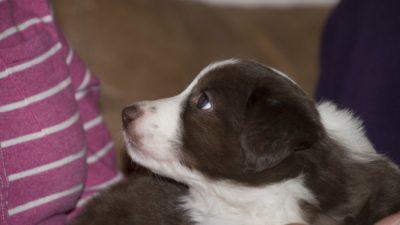 Люди безжалостно выбросили щенка без передних лап. Но его жизнь сложилась лучшим образом!