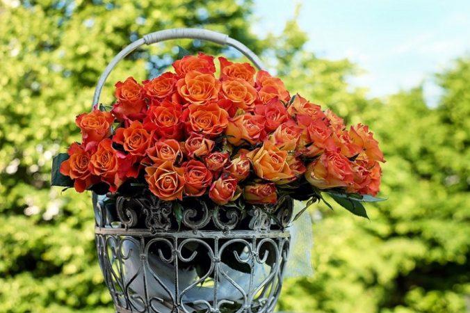 Розы. Фото: pixabay.com   Epoch Times Россия