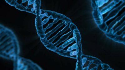 Неправильное питание может привести к повреждению ДНК