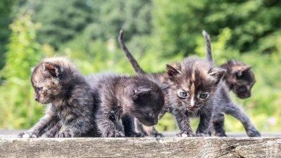 Женщина нашла большую коробку на своём заднем дворе. А в ней было 39 котят!