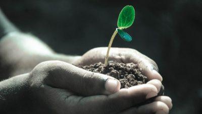 Растения принимают решения, как люди! Учёные доказали