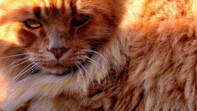 Мальчик выбрал в приюте рыжего 10-летнего кота по кличке Крошка, который был совсем не крошкой. Это была любовь с первого взгляда!