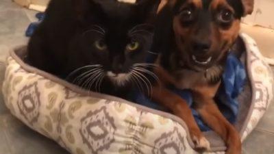 (Видео) В приют поступили кошка и собака. Их отношениям можно позавидовать!
