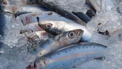 Интернет – магазин рыбы