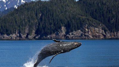 Как экскременты китов помогают нам дышать