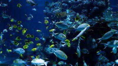 Немного о рыбах, которые ходят по суше