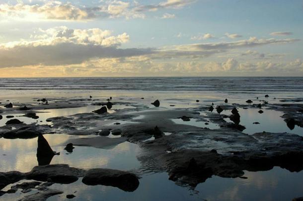 Подводный доисторический лес на побережье Уэльса. Фото: Kristi Herbert/Flickr/CC BY 2.0   Epoch Times Россия