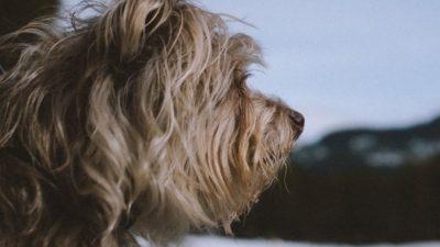 Пёс с перебитыми лапами умоляюще смотрел на прохожих. И его заметили