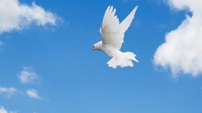 (Видео) Голубь завис в небе, озадачив очевидцев. Параллельная реальность или сбой в матрице?