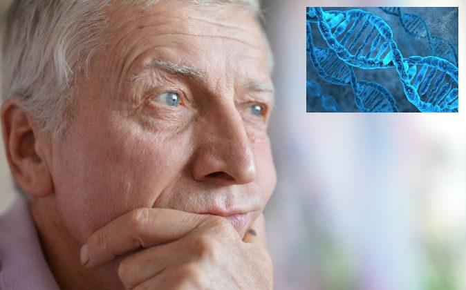 По словам доктора Брюса Липтона, ДНК не определяет ваше здоровье (например, генетические заболевания) или другие атрибуты, а ваше восприятие определяет. По его словам, это действительно вопрос оптимизма против пессимизма. (Shutterstock *)   Epoch Times Россия