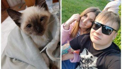 Геймер до последнего боролся за жизнь найденного котёнка. Подписать согласие на усыпление парень не смог