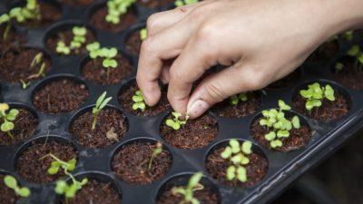 Фермер из США рискнул посадить загадочные семена из Китая, которые получил по почте. Любопытство превысило страх
