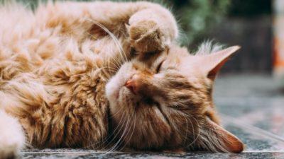 Кот с мультяшными глазами не стал изгоем. Наоборот — живёт припеваючи!
