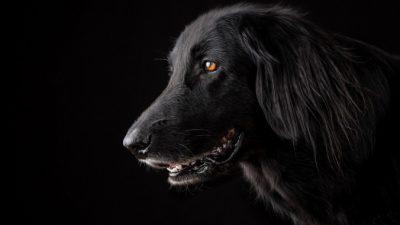 Супруги взяли собаку, но в первую же ночь она разбудила их громким лаем. Оказалось, двухлетнему сыну требовалась помощь