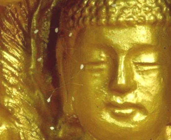 Цветы удумбара на статуе Будды. Фото: Epoch Times   Epoch Times Россия
