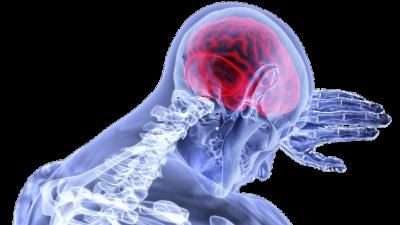 Мозг успешных людей имеет особое устройство