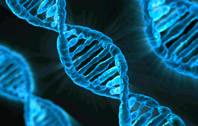 Учёные до сих пор не имеют окончательно представления о функциях генома. Фото: PublicDomainPictures/pixabay/CC0 Public Domain | Epoch Times Россия