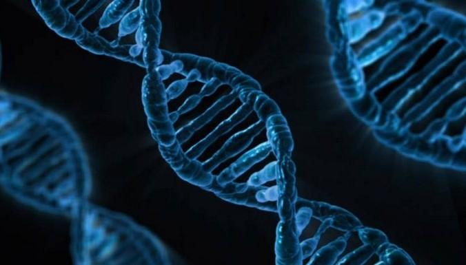 Человеческая ДНК. Фото: Public Domain   Epoch Times Россия