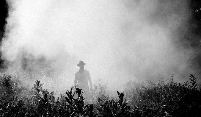 Даже следовые количества сельскохозяйственных ядов могут создать проблемы в долгосрочной перспективе. Фото: Unsplash /pixabay/CC0 Public Domain   Epoch Times Россия