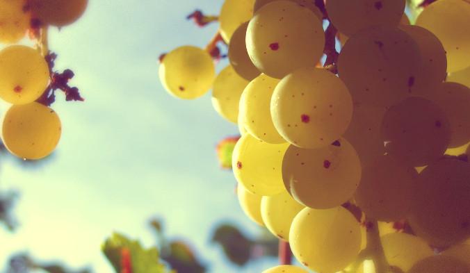 Диетологи рекомендуют принимать от 150 до 250 мг экстракта виноградных косточек, чтобы создать защитный барьер от рака толстой кишки. Фото: warpmike/pixabay/CC0 Public Domain | Epoch Times Россия