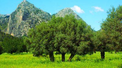 Как деревья заботятся о нас