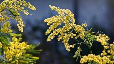 Растения воспринимают звуки