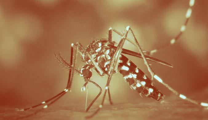 Комары могут переносить вирусы, бактерии и простейших, которые при попадании в организм вызывают серьёзные инфекционные заболевания. Фото: WikiImages/pixabay/CC0 Public Domain   Epoch Times Россия
