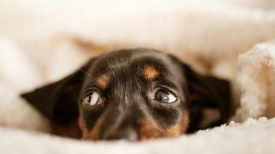 Оригинальными ушами собаки восхищается весь интернет. А все благодаря доброму парню, который подобрал её на улице