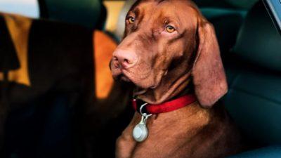 Бездомный пёс стал менеджером дилерского центра Hyundai. И теперь его ждёт большое будущее!