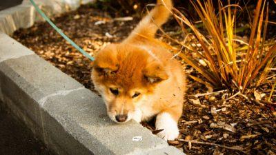 Женщина нашла в кустах странного щенка. Ни она, ни пользователи сети не понимали, кто же это такой. Ответ дал ветеринар