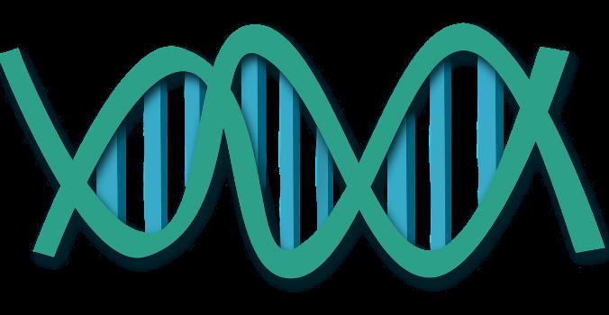Анализ ДНК помог разрешить загадку басков