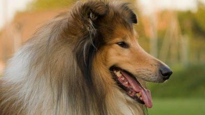 Что можно и чего нельзя дарить на Новый год Собаки? Теперь легче выбрать подарок близким