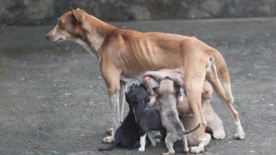 Мужчина увидел собаку со щенками. Вдруг среди них показалась детская ручка