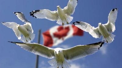 Канада выделит $20 миллионов на борьбу с детскими браками