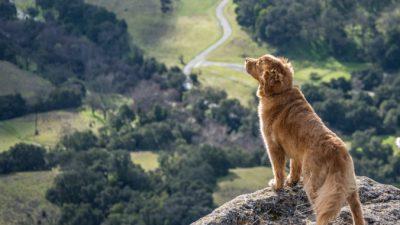 Пёс с разорванным носом оказался не нужен хозяевам, зато сделал счастливыми других