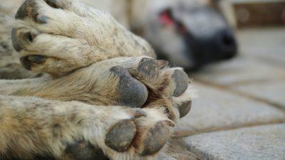 Бродячий пёс со свалявшейся шерстью боялся людей. А они не стали церемониться: отловили, остригли и отдали в любящую семью!
