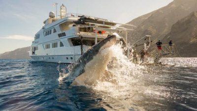 (Видео) Парень купался за бортом лодки, когда в сантиметрах от него всплыла самая большая в мире акула