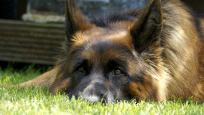 Женщина пришла в приют и попросила двух самых старых собак. Она плакала, когда забирала их, а сотрудники не верили своему счастью